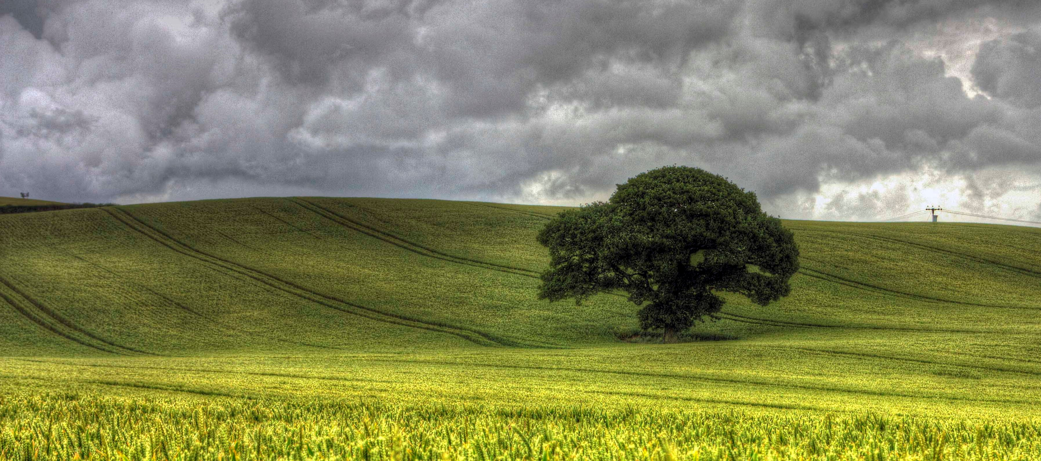 lone_tree_in_a_field_of_crops_near_michaelstone-y-fedw,south_wales_uk.jpg